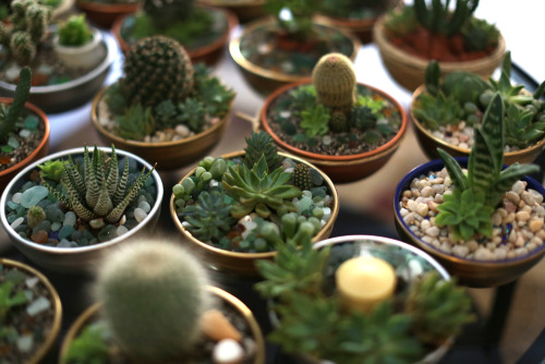 divinefuck:  bloomandglow: Finally had some time to take pics of our plant project. Succulent + Cacti, lovingly arranged by hand and accented with Italian sea glass + terra cotta from the Amalfi Coast.