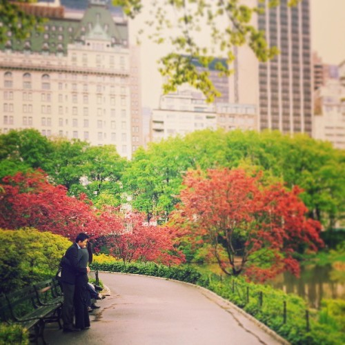#centralpark #urban #city #trees #park #love #hug #embrace #couple #ny #NYC