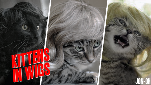 jon-oh:  REBLOG if you want Kittens in Wigs to be America's Next Drag Superstar! Because let's face it, at this point ANYTHING is getting more votes than Roxxxy Andrews.