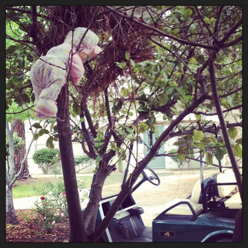 Guys I found a doll hanging in a tree at school. Why is this happening help