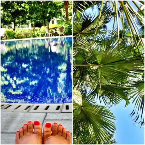#takemeback to the #pool and the #palmtrees and blue #skies.. There's nothing I'd rather do right now than chill by the poolside with a great book. I'm starting to feel the school-fatigue. I need another #vacation. #springbreak #throwback #relax #pretty @seansaintgabel
