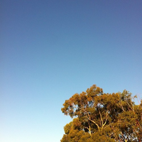 clear Sunday skies. #noedit