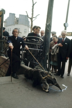 Salvador Dali Taking His Anteater for a Walk, Paris 1969