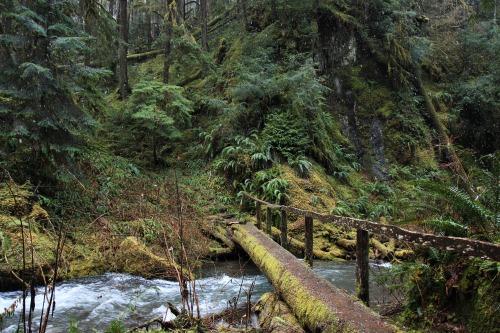 burningmine:Little River Trail, January 2020