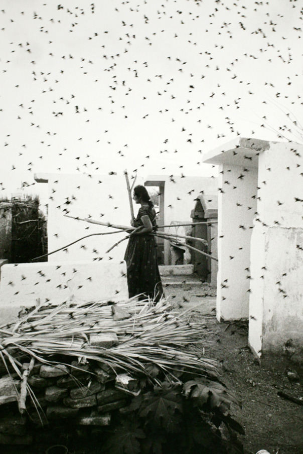 "burnedshoes:  © Graciela Iturbide, 1988, Cemetery, Juchitán, México ""The only real equality is in the cemetery."" (German Proverb) (thanks to / via: undr)"
