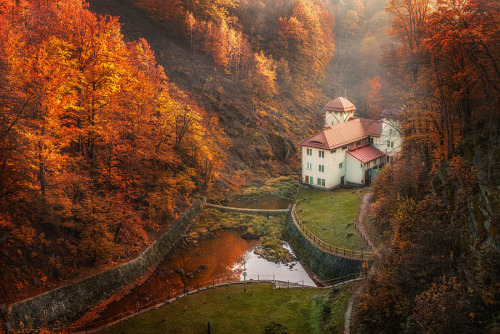 woodendreams:  (by Miroslaw Brzozowski)