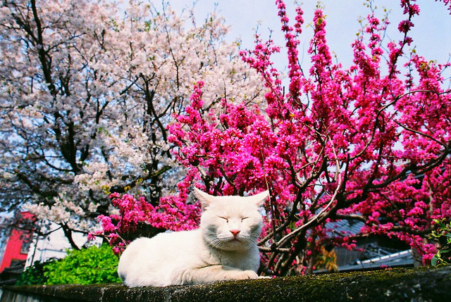 Dreaming by nekojimakeibu on Flickr.