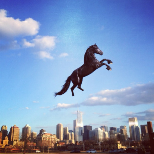 tinyhorses:  This tiny horse is a fan of Chicago and a big optimist.  I like TinyHorses.