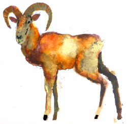 ram. watercolors brendan garbee