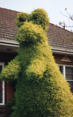 Topiary, Griffith, NSW Happy Oz/Invasion Day all!