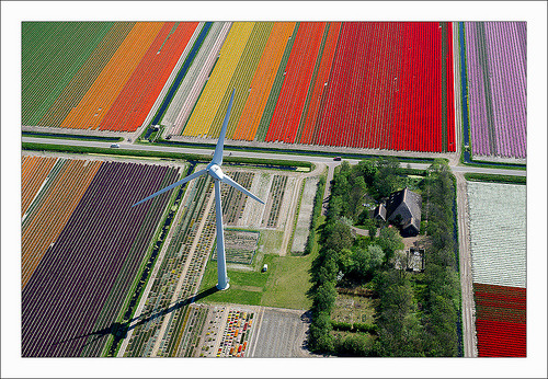 Windmill, tulip fields, and someone's home. Photo by Normann Szkop. More like it here. (Found via Fidgetry)