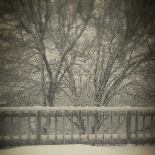 Looks beautiful out today. #snow