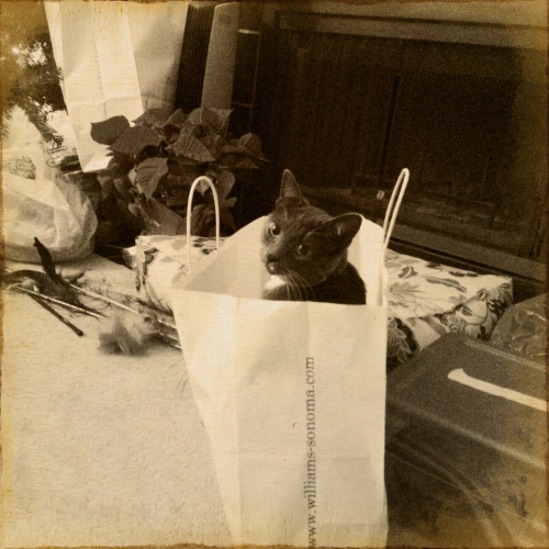 The Daily Kitty likes this Christmas shopping thing. #vintique