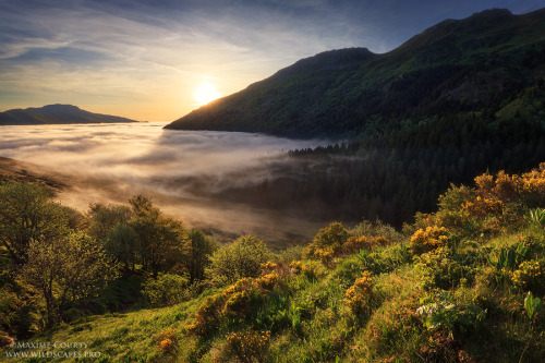 wooden-folks:  Mist in the Valley by *MaximeCourty