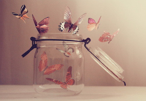 butterfly | Tumblr on We Heart It - http://weheartit.com/entry/62026218/via/shannchristiee   Hearted from: http://laursaurus.tumblr.com/post/50890915423