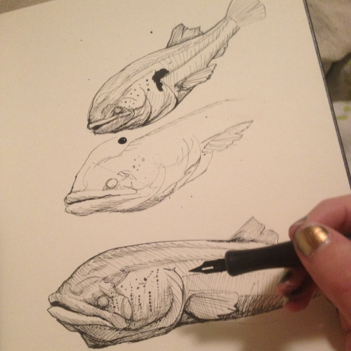 hannalemoine:  Practicing cavefish in India ink to prepare myself for my new Ichthyology illustration job.  Congratulations on the new job and thanks for the submission!