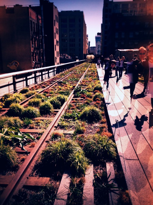 The Highline, cut back for Spring
