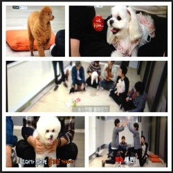 In flight entertainment, where #shinhwa hosts a show demonstrating their dogs and their tricks, also making my dreams come true #heartfailure