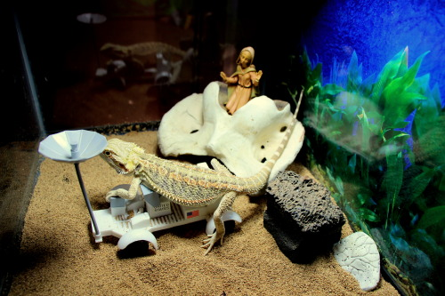 stevie pushes his moon rover around after arriving in his new tank the luckiest of side-of-the-road scores.  homesquare is going through puberty and needed a bigger space to rule