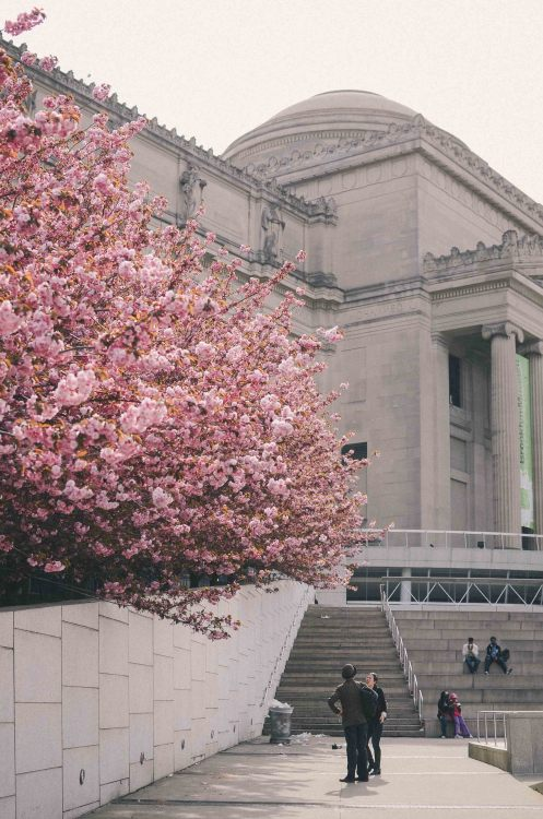 spring at the brooklyn museum.