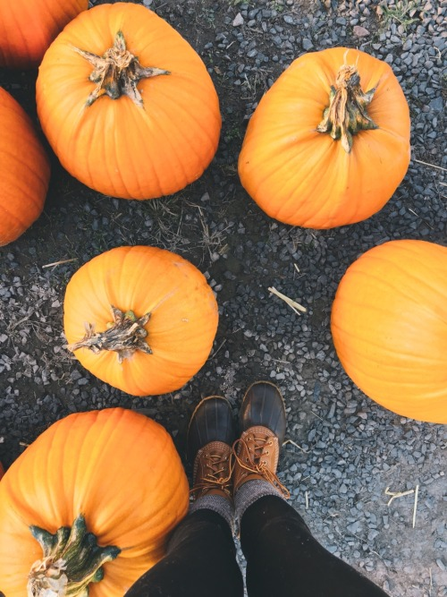 pumpkins fall bean boots preppy llbean October iPhone 6S