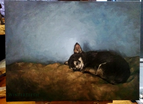 thelastbuffalo:  A quick puppy study! oil on canvas 24 x 18 in