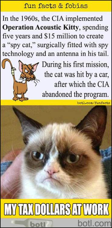 funfactsandfobias:  Grumpy Cat learns of Operation Acoustic Kitty (♪♫ Click the opened image to hear the music ♪♫) More at Botl