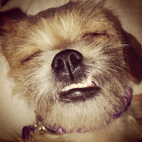Really??? @11chrissy11 #dog #sleep #cute #love #lol #chewbacca