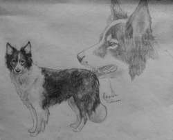 Border collie drawing by Mystic-Spiritus. [portfolio] [etsy]