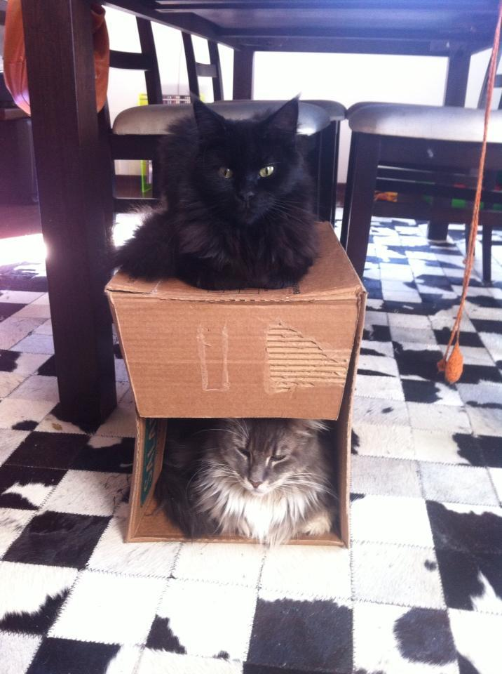 Gaia and Barbara are very satisfied with their new duplex apartment with south facing back yard. Photo by ©Carlos Peres