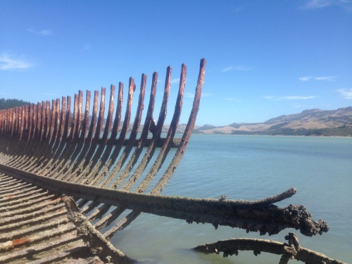pagesandleaves: