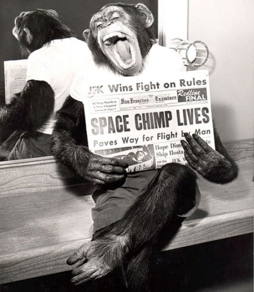 SPACE CHIMP LIVES.