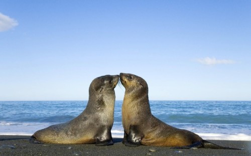 Actually this is probably more what we'd look like. We're seals in this one