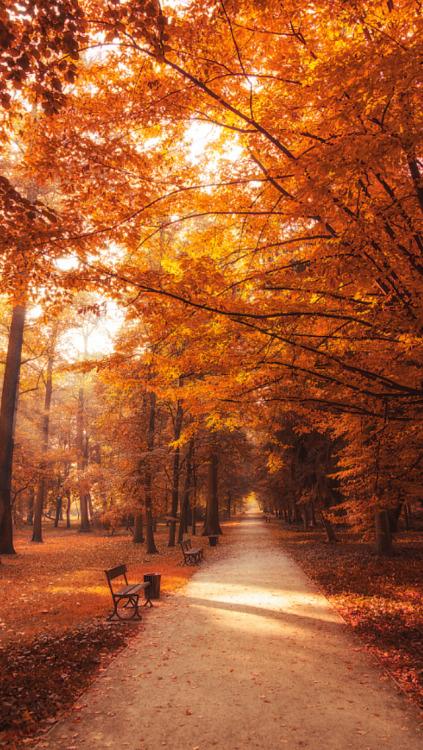 ehlockscreens:Fall is back you guys!! 🍁 Like or reblog if you save, sweetheart 🌙