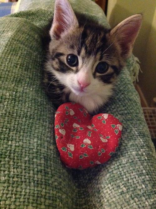 "catsbeaversandducks:  ""Promise you will take care of me forever? Even when I'm old?"" Photo via The Mayhew Animal Home"