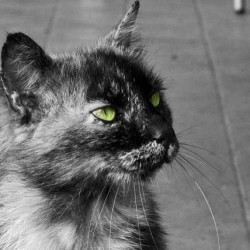 Prrr Mao! #cat #gatto #greeneyes #occhiverdi #verde #green #1color #onlygreen