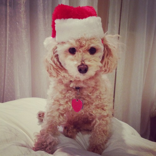 I guess the only thing I like more than a dog in a Santa hat is maybe 100 dogs and cats, all in Santa hats, holding paws and snuggling and playing together forever. This is a good start. (Thanks for the photo alexteaa!)