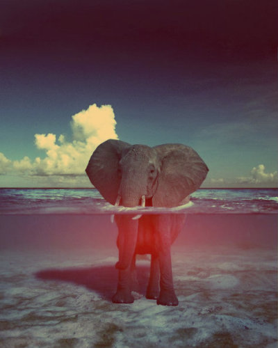 callmeswaggyjacob:  i love elephants