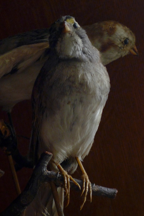 Antique Taxidermal Birds. Ryan Matthew's Collection. Photo by Sergio Royzen.