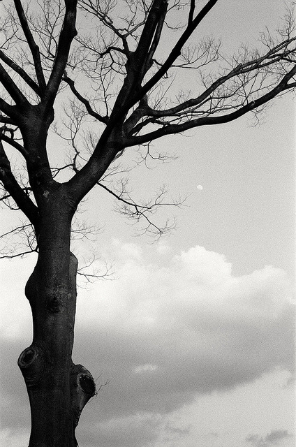 木 (The tree) on Flickr.