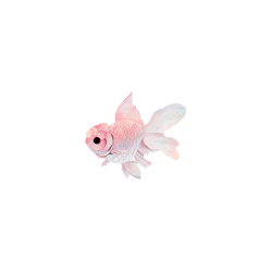 saraaharon:  here! have this little transp fish as a token of appreciation