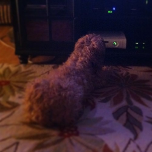 My dog is weird… #dog #weirdpet #weird #xbox360