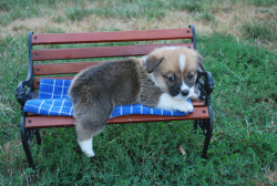 corgisarebetterthanyou:  They even make little benches for homeless corgis in the park.