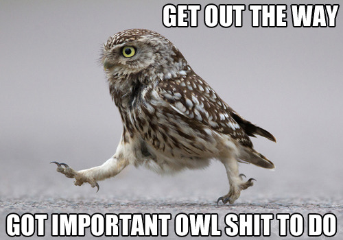 Owl shit, man.
