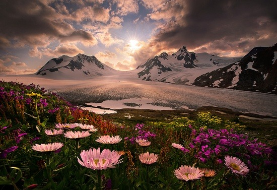 Spring - Wildflowers of Alaska