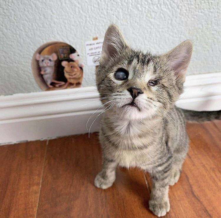 Kittens with disabilities deserve just as much love as everyone else via /r/cats by smokelxrd https://ift.tt/31IsCn8 #cats#cat#kittens#feline#gato#gatinho#filhote#cutecatsgifsandetc
