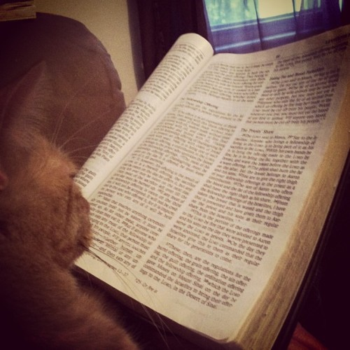 my momma raised this house right. even the cat reads the Bible!! 😸🙏📖 #cat #Bible #book #reading