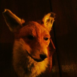 Fox Brother (at The Old Nun's Head)