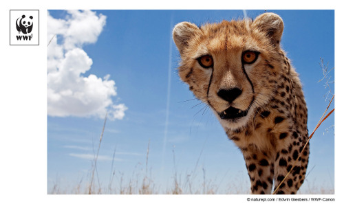 wwf:  Just uploaded 1 new photo(s) on Flickr. http://bit.ly/PE0iEU