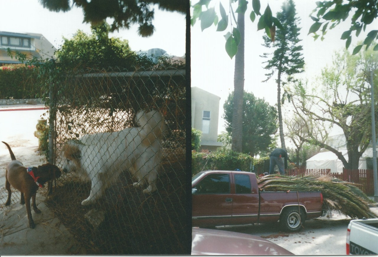 Two Dogs, Los Angeles (2012) by EC
